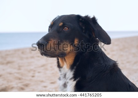 Portrait of a dog on the beach. Toned image.