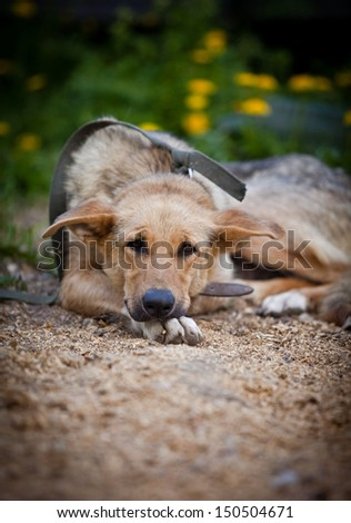 Portrait of a dog on the grass in nature - stock photo