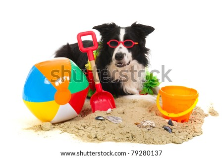 Portrait of a dog on vacation at the beach - stock photo