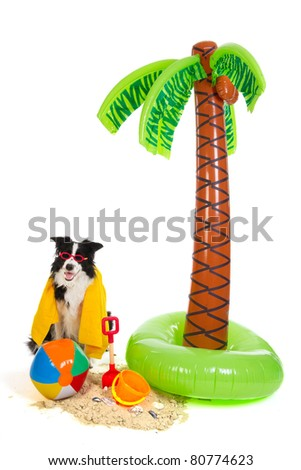 Portrait of a dog on vacation on a tropical beach - stock photo