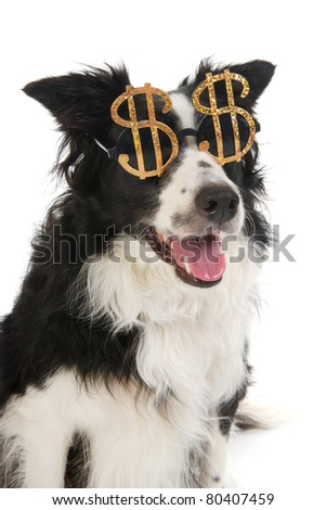 Portrait of a dog with dollar sunglasses