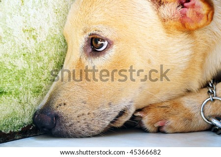 Portrait of a dog with sad expression. - stock photo