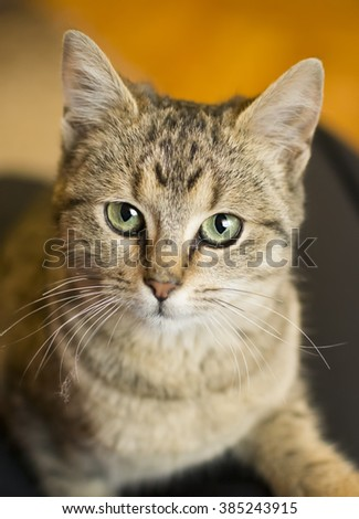 portrait of a domestic cat