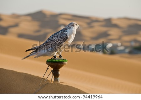Portrait of a falcon or bird of prey in desert - stock photo