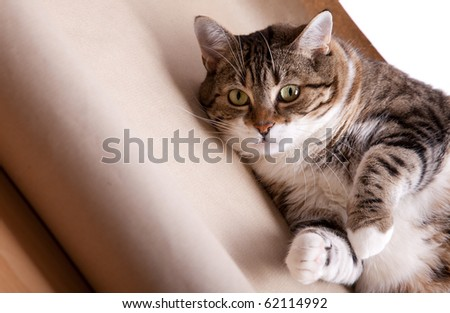 Portrait of a fat cat lying on the floor - stock photo