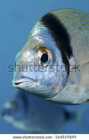 Portrait Of A Fish - stock photo