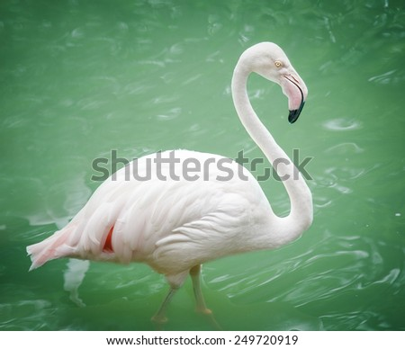 Portrait of a flamingo in lake - stock photo