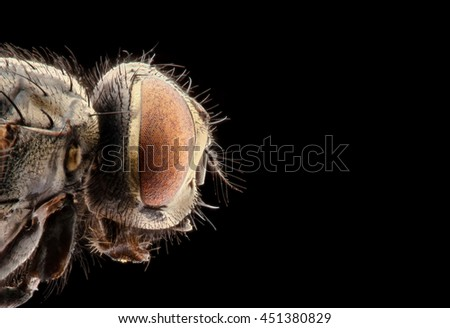 portrait of a fly on a black background - stock photo