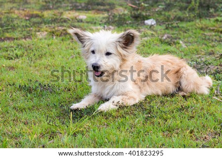 Portrait of a friendly dog resting on green grass.