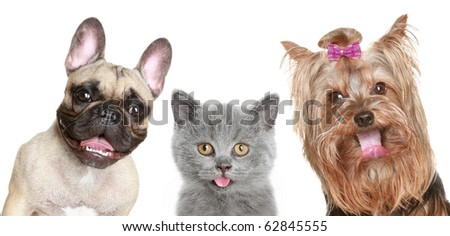 Portrait of a funny kitten and two happy puppies on a white background - stock photo