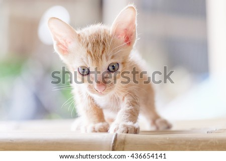 Portrait of a funny little kitten. White with red kitten sitting on a table or windowsill. Funny cat paw raised, seen pink paw pads. Kitten one month. He's cute and sweet. - stock photo