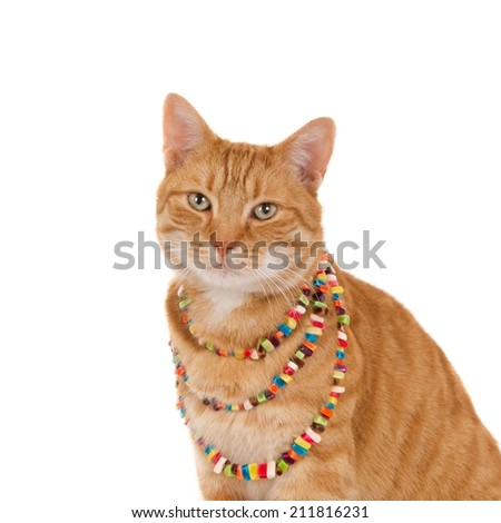 Portrait of a ginger cat with a colorful beaded necklace, isolated on white (square, 1x1) - stock photo