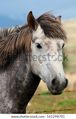 Portrait of a gray horse - stock photo