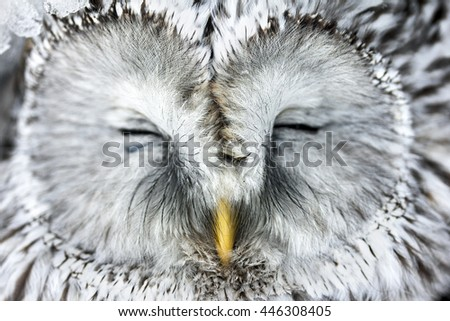 Portrait of a Great Horned Owl. - stock photo