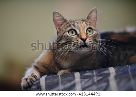 Portrait of a green-eyed striped cat with white moustaches - stock photo