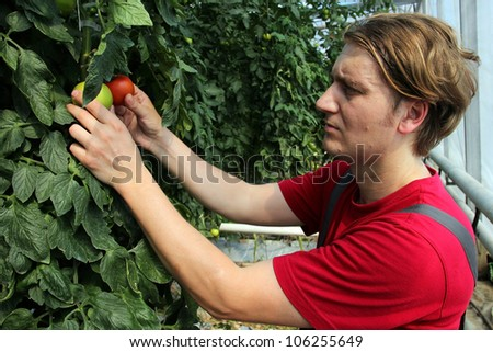 Portrait of a greenhouse worker at work. - stock photo
