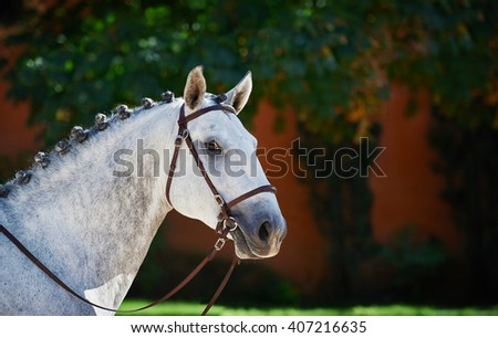 Portrait of a grey sport dressage horse