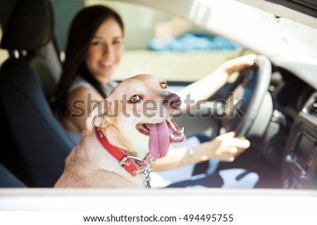 Portrait of a happy and very excited dog looking through the window of a car with her tongue out and a driver in the background