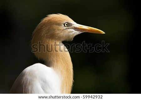 Portrait of a heron - stock photo