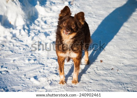 Portrait of a homeless dog in winter