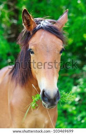 Portrait of a horse - stock photo