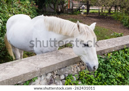 Portrait of a horse - stock photo