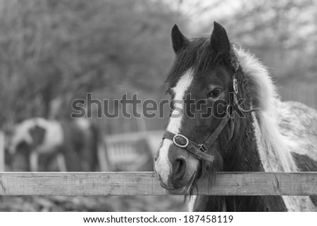 Portrait of a Horse Behind a Wooden Fence. Processed in B&W. Copy Space - stock photo