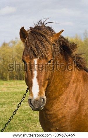 Portrait of a horse in a pasture in the village - stock photo