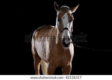 Portrait of a horse in studio on a black background - stock photo