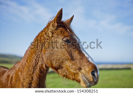 Portrait of a horse, Ireland