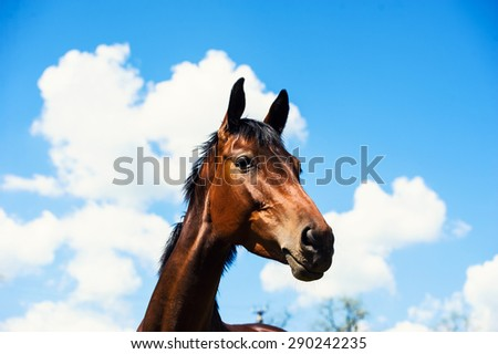 portrait of a horse on a background of blue sky - stock photo