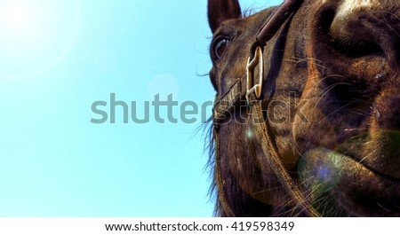 portrait of a horse on a background of blue sky, big muzzle in front, Suitable as a banner on the web, Rays of light in the upper left corner - stock photo