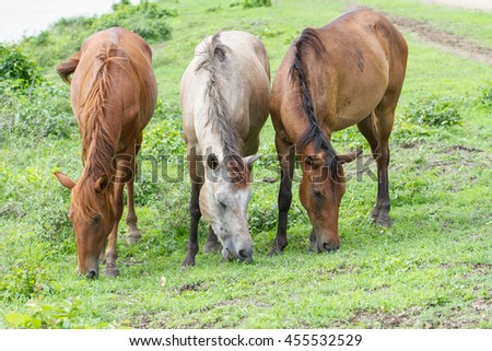 Portrait of a horse on countryside. - stock photo