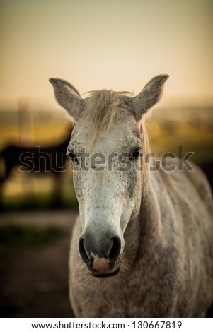 Portrait of a horse's head - stock photo