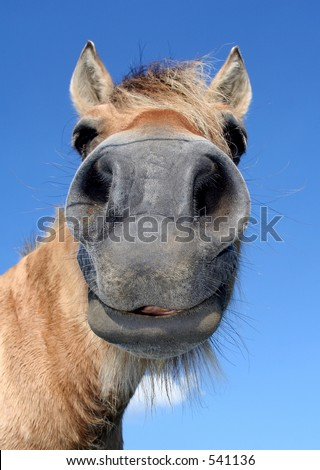 portrait of a horse, with a funny expression - stock photo