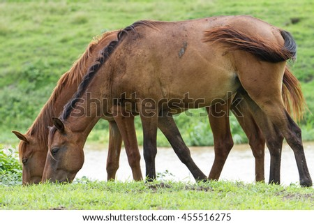 Portrait of a horses on countryside. - stock photo
