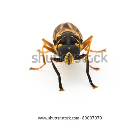 Portrait of a hoverfly - stock photo