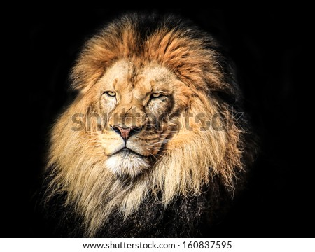 Portrait of a King - stock photo