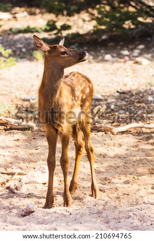 Portrait of a little fawn at the Grand Canyon - stock photo
