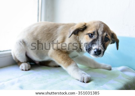 portrait of a little puppy afraid in the shelter for dogs - stock photo