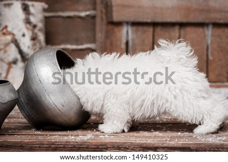 Portrait of a little white dog on the porch