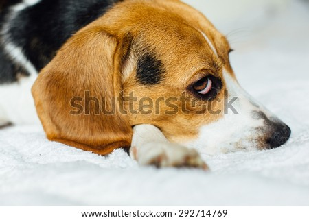 ... puppy dog laying on the white bad with white background - stock photo