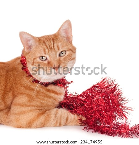 Portrait of a looking ginger cat playing with Christmas garlands, isolated on white (1x1, square) - stock photo