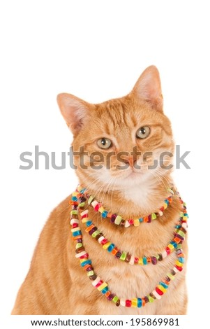 Portrait of a looking ginger cat with a beaded necklace, isolated on white - stock photo