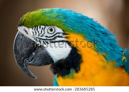 Portrait of a Macaw parrot with a big curved beak and beautiful feathers - stock photo