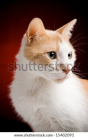 Portrait of a male cat