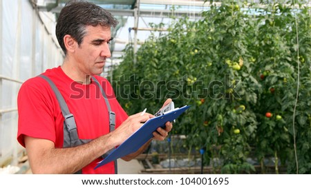 Portrait of a man at work in commercial greenhouse. Greenhouse produce. Food production. Tomato growing in greenhouse. - stock photo
