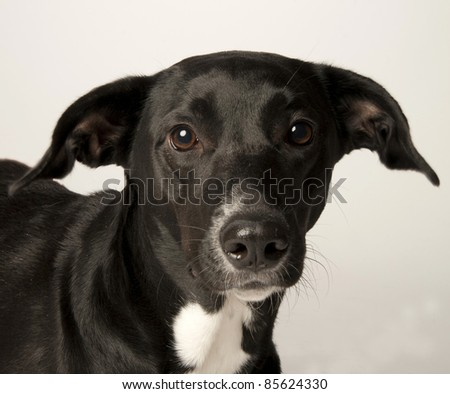 Portrait of a mutt - stock photo