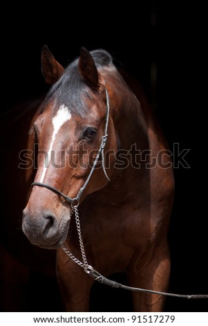 Portrait of a nice brown horse on black background - stock photo