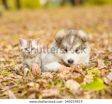 portrait of a puppy and a kitten for a walk in the autumn park - stock photo